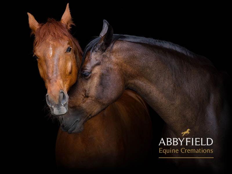 Abbyfield equestrian